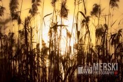 2015 - November - Foggy Sunrise (9 of 11)