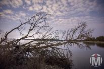 Fallen Tree - HDR - Bissel Cove - North Kingstown, RI