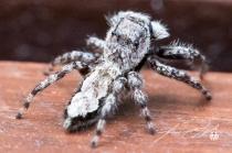 2018 - August - Friendly Neighborhood Spider-Web Version-6