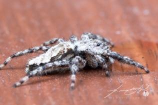 2018 - August - Friendly Neighborhood Spider-Web Version-7
