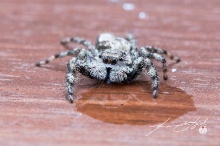 2018 - August - Friendly Neighborhood Spider-Web Version-8