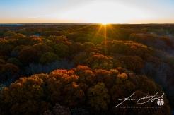 Daylight Savings Sun-kissed Autumn Trees