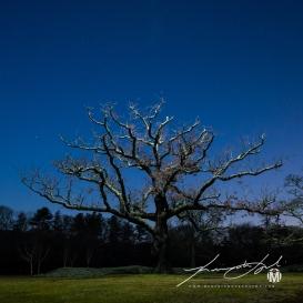 Light From Above - Tree At Goddard Park